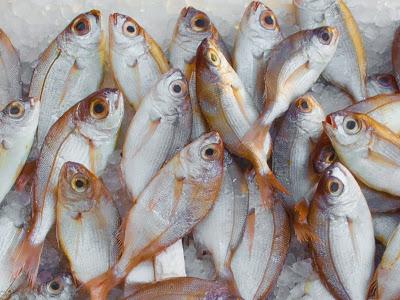 el-mercurio-en-el-pescado